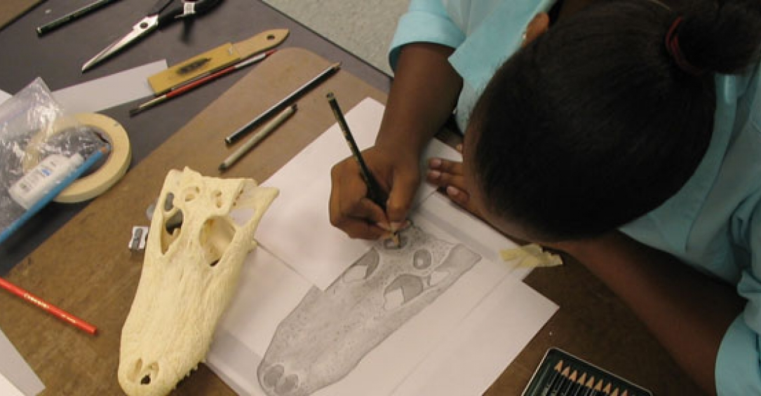 Student sketching a skull