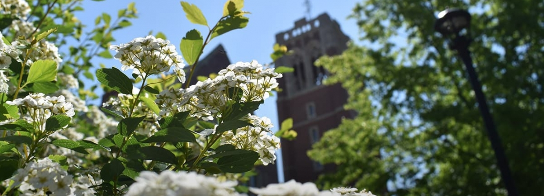 spring campus flowers and JCU clock tower
