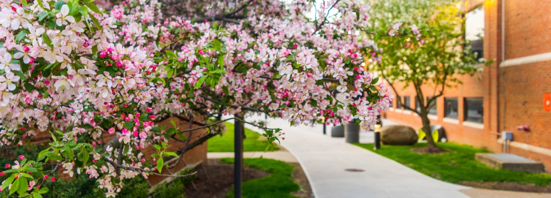 photo of flowering tree on the JCU campus