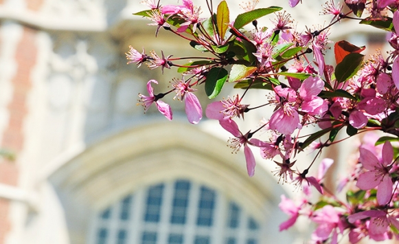 Photo of the administration building with a branch full of pink colored flowers in the foreground.