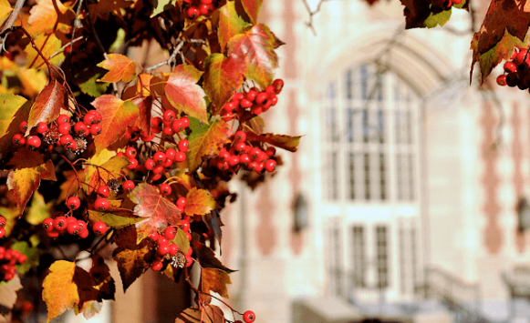 fall leaves with the administration building in the background