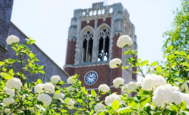 picture of the bell tower with white flowers